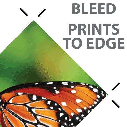 Bleed - Prints to Edge